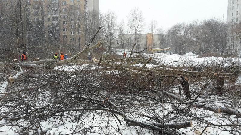 Вырубка деревьев на земельном участке