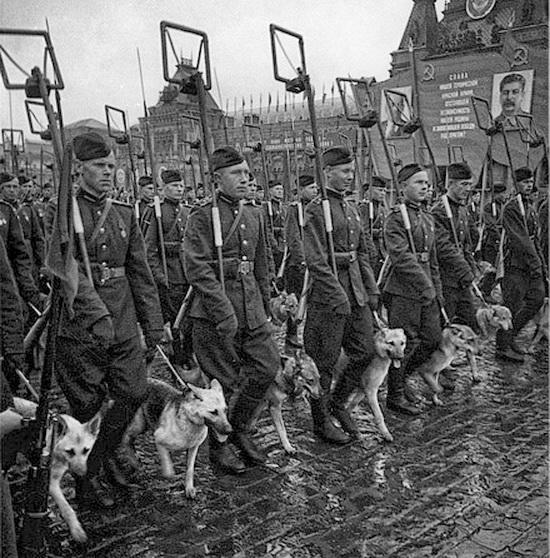 собака-звезда военных лет