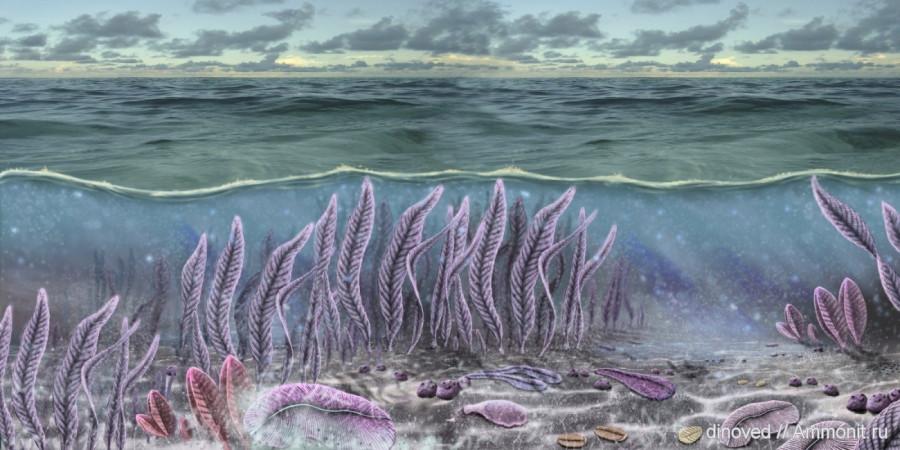 Вендобионты. Около 600 млн. лет назад...Моря в те времена были очень мелководными и прохладными. Суша - пуста и безжизненна.
