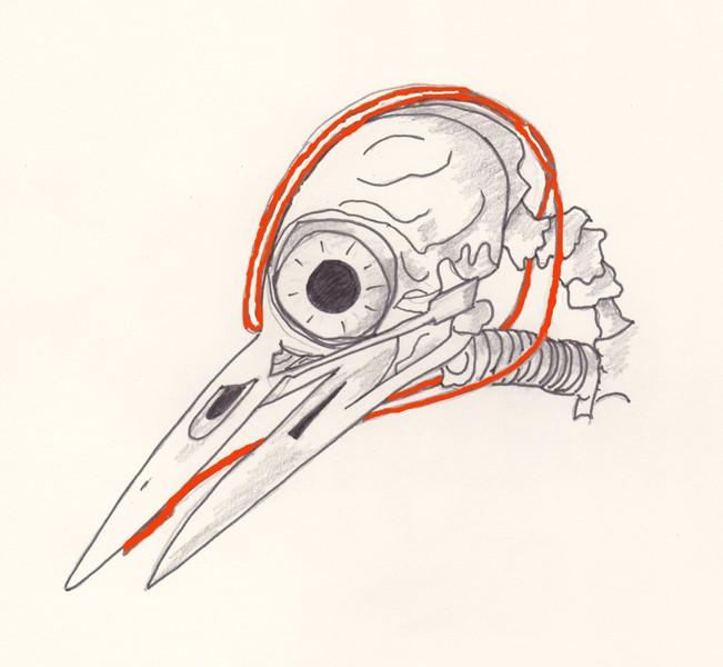 Dendrocopos_major_skull