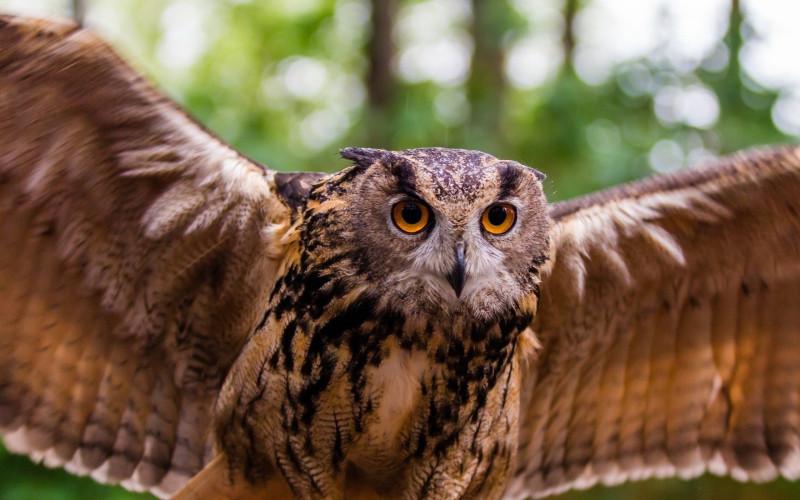 2560x1600-px-owl-1338331