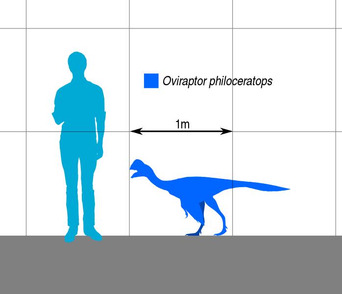 698px-Oviraptor_Scale.svg