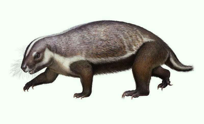 Adalatherium hui — это млекопитающее-гондванатерий, размером с кошку, получившее название «безумный зверь», которое жило на Мадагаскаре 2
