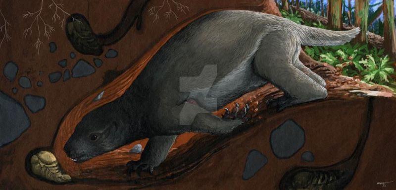 Adalatherium hui — это млекопитающее-гондванатерий, размером с кошку, получившее название «безумный зверь», которое жило на Мадагаскаре