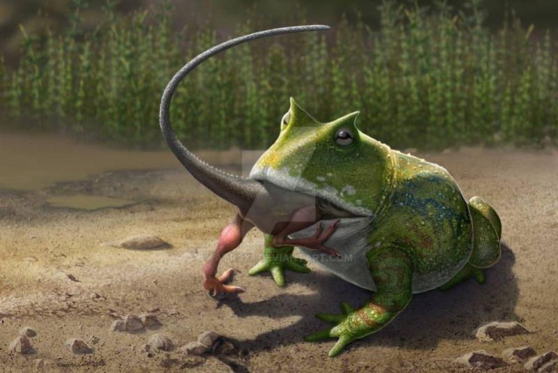 Beelzebufo ampinga — гигантская ископаемая лягушка из семейства Ceratophryidae. Обитала на Мадагаскаре, известна по фрагментам скелета из пород возрастом 65—70 млн лет
