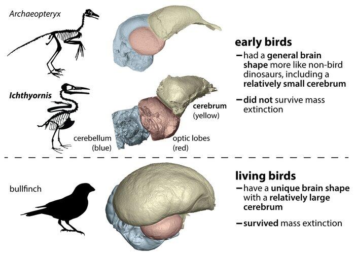 bird-brains-left-other-1