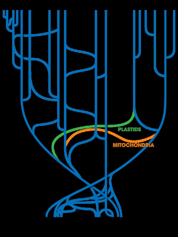 800px-Tree_Of_Life_(with_horizontal_gene_transfer).svg