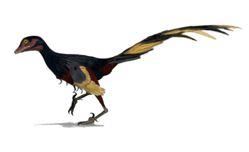 Jinfengopteryx_wiki