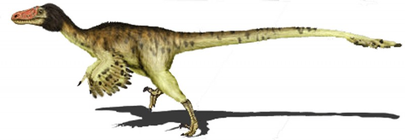 Adasaurus_mongoliensis2_copia