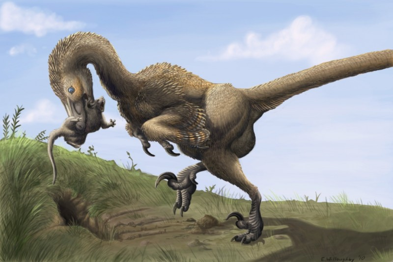 Saurornitholestes_digging_Burrows_wahweap