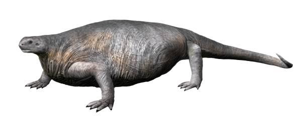 Cotylorhynchus_NT_small