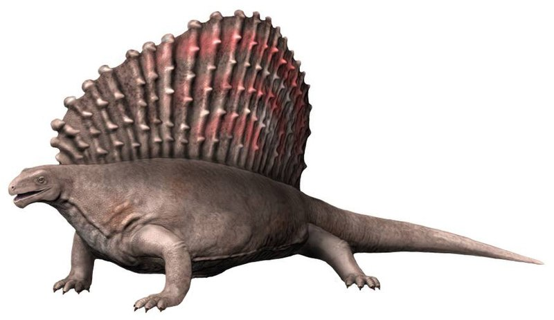 800px-Edaphosaurus_NT_small