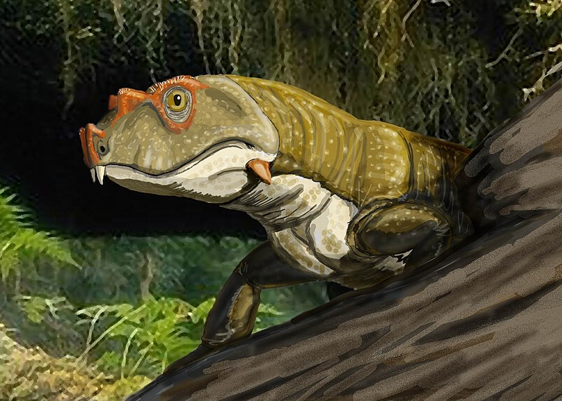 800px-Tetraceratopsinsignis1DB