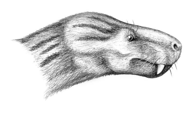 Charassognathus