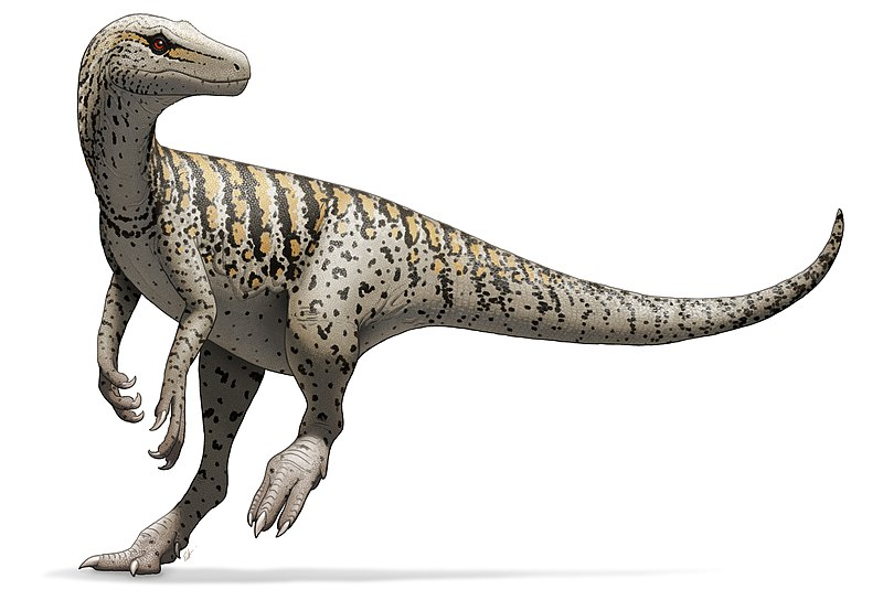 800px-Herrerasaurus_ischigualastensis_Illustration