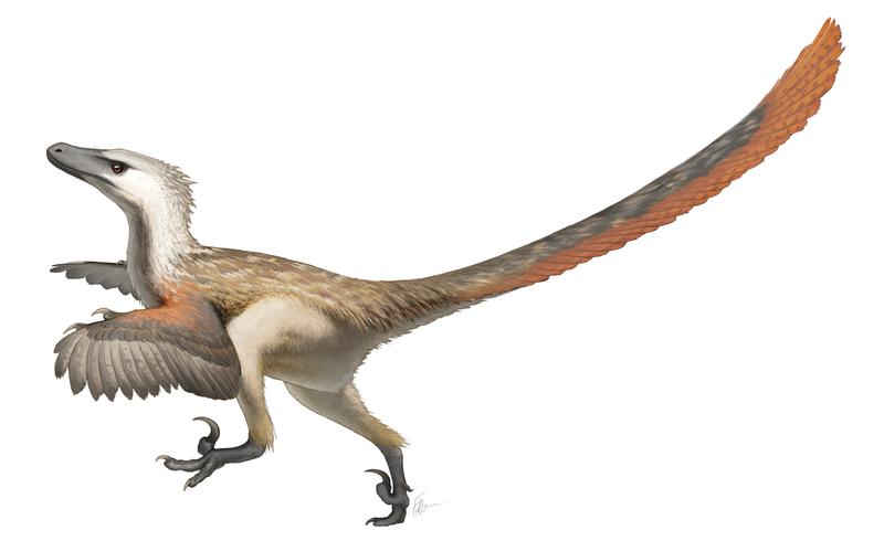 800px-Velociraptor_Restoration