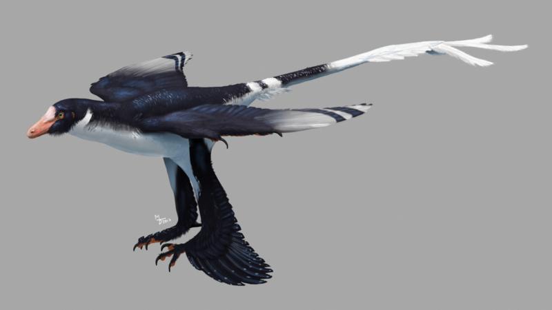 Zhongjianosaurus_yangi