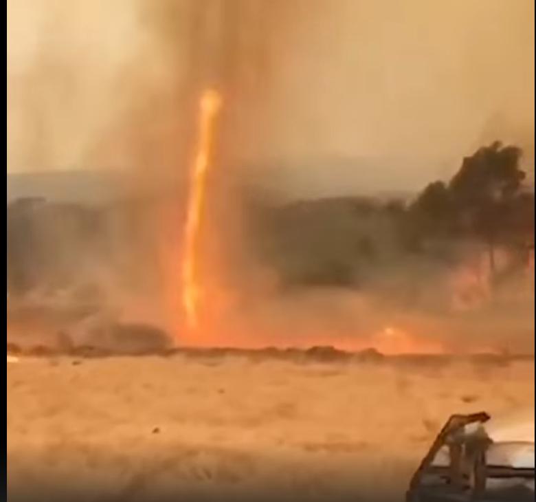 Австралия в огне, коалы в беде, Дарвинизм на коне Screenshot_1