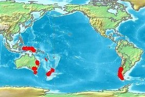 Nothofagus_range_including_New_Caledonia