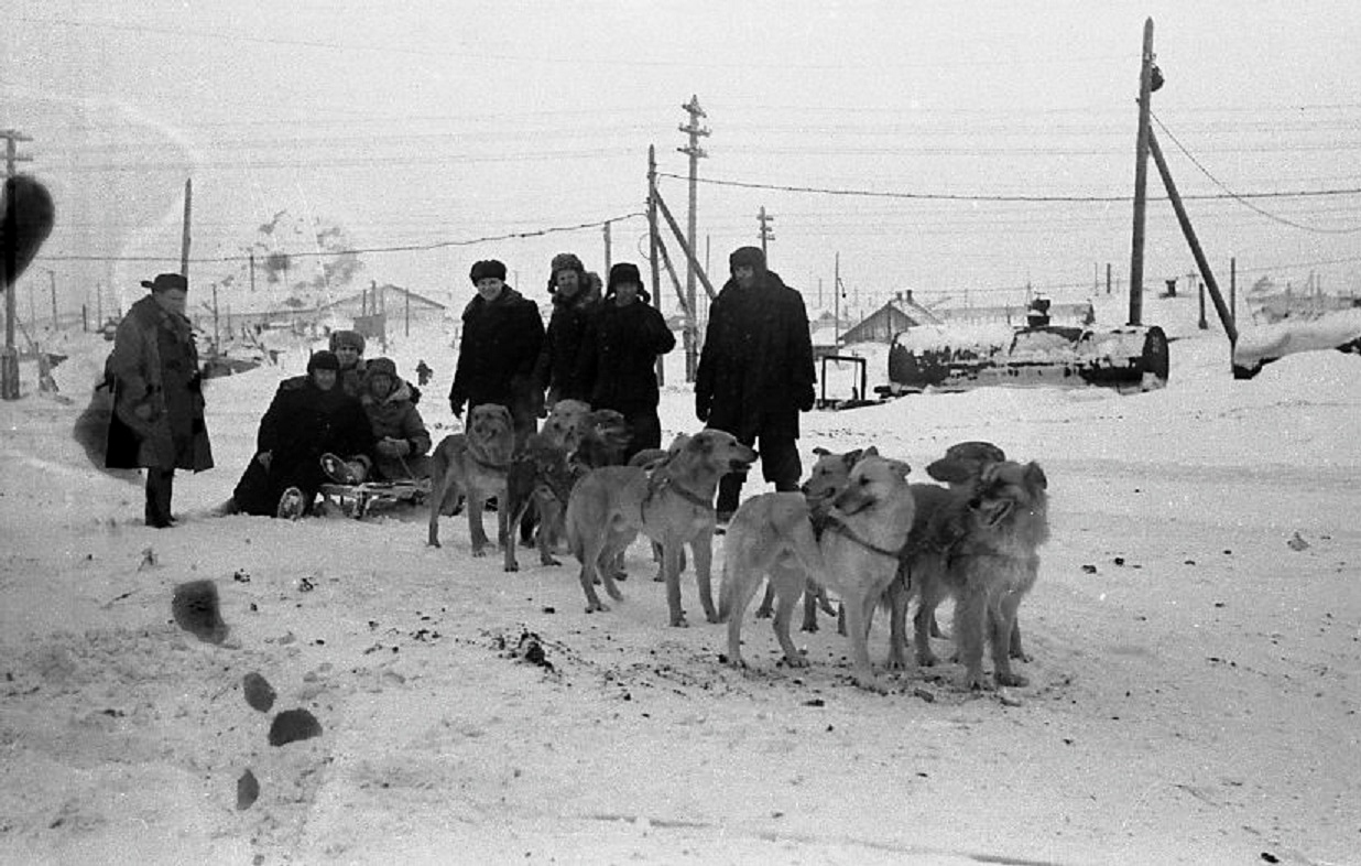Упряжки собак, 1957
