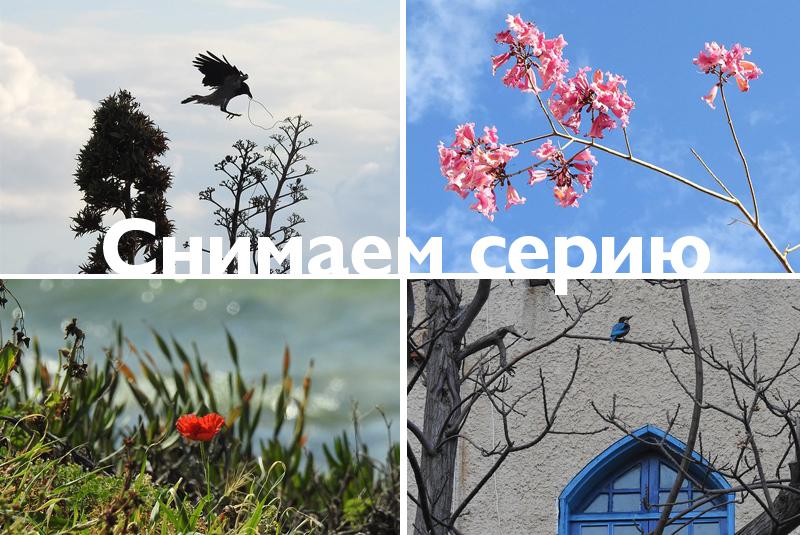 серия_plumeriya
