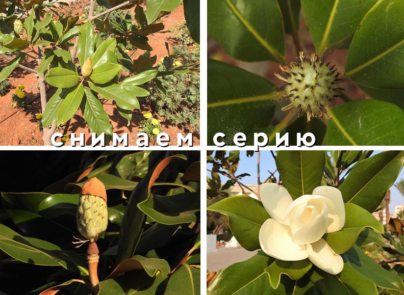 серия_plumeruya2