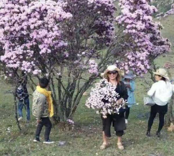 Топ-10 Китайских неадекватных-туристов по версии Shanghaiist в 2017 азалии в марте Сычуань ломают деревья китайцы срубают ветки для барбекю азалии цветущие горы склоны