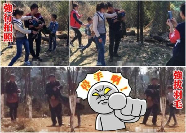 Топ-10 Китайских неадекватных-туристов по версии Shanghaiist в 2017 туристы вырывают павлинам хвосты в национальном парке некультурные китайцы