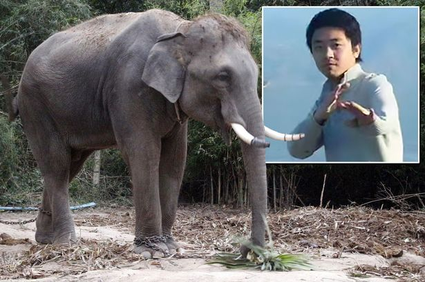 Топ-10 Китайских неадекватных-туристов по версии Shanghaiist в 2017 туристы дергали слона за хвост гид был растоптан слоном в таиланде тайланде