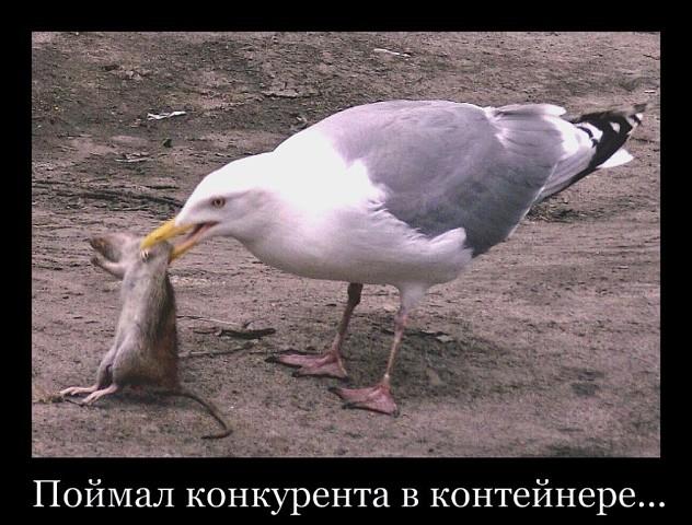 пьяной суп из чайки демотиваторы расположение короткая сторона