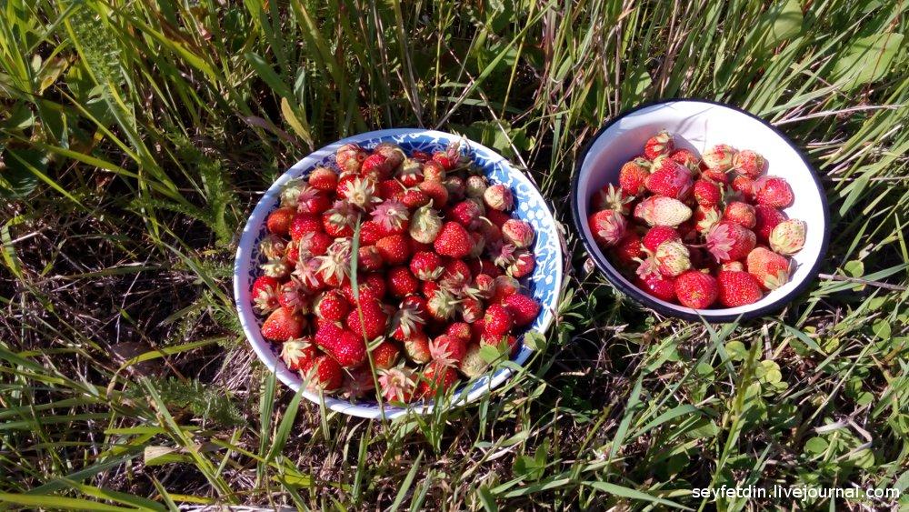 урожай клубники от 19 июня