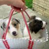 Puppybasket!