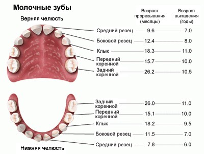 Как лечат молочные зубы у детей если есть дырка