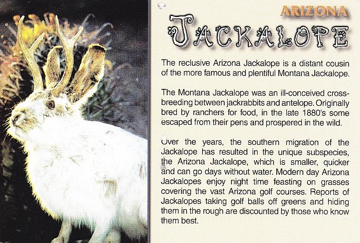 Laskey.Jackalope