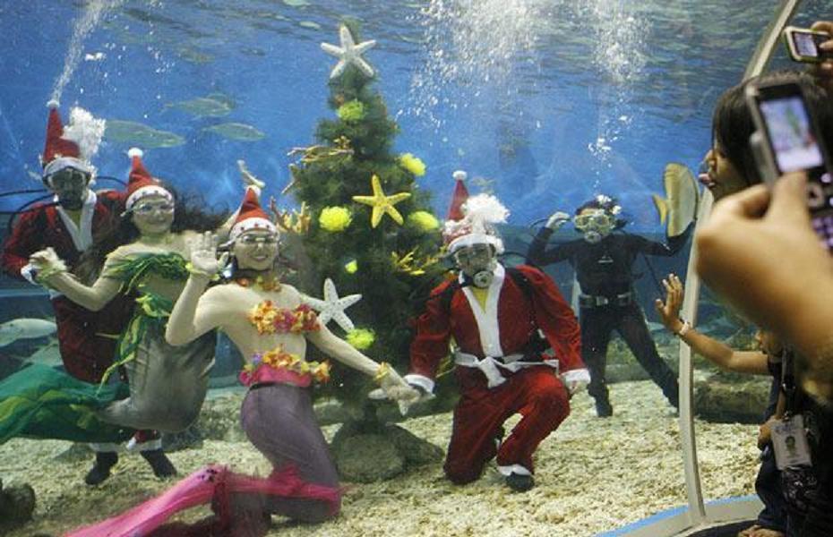 Manilla Christmas mermaids