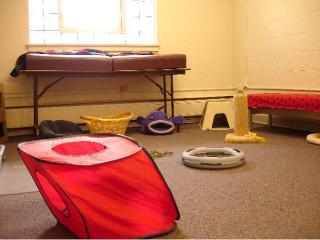 kitten room1