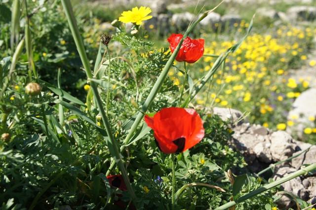 цветы на развалинах