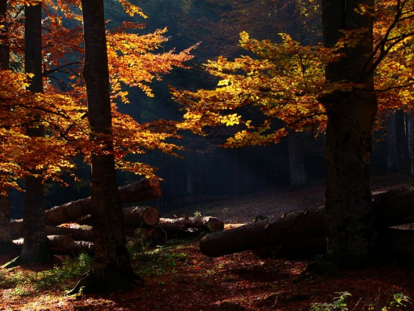 Autumn_forest_by_Costelino