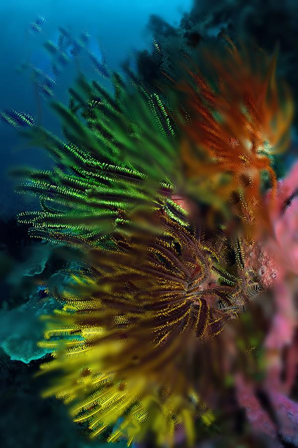 Коралл светофор вазелин стекло
