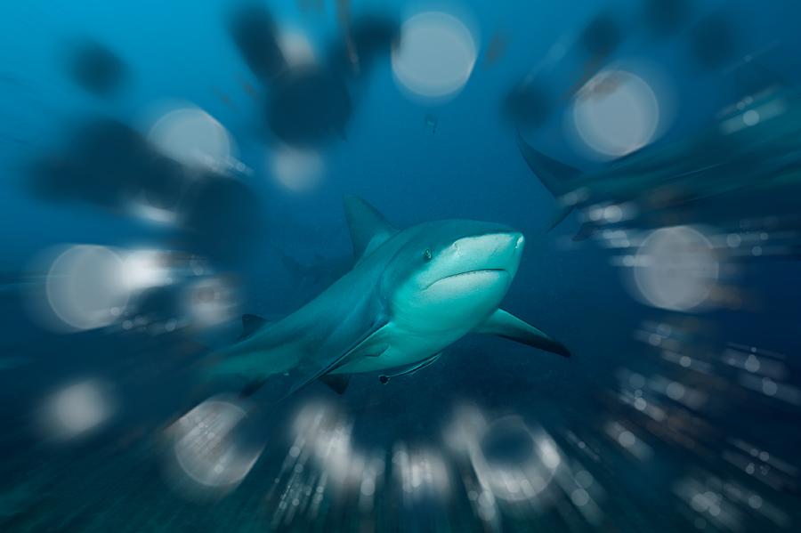 Акула боке