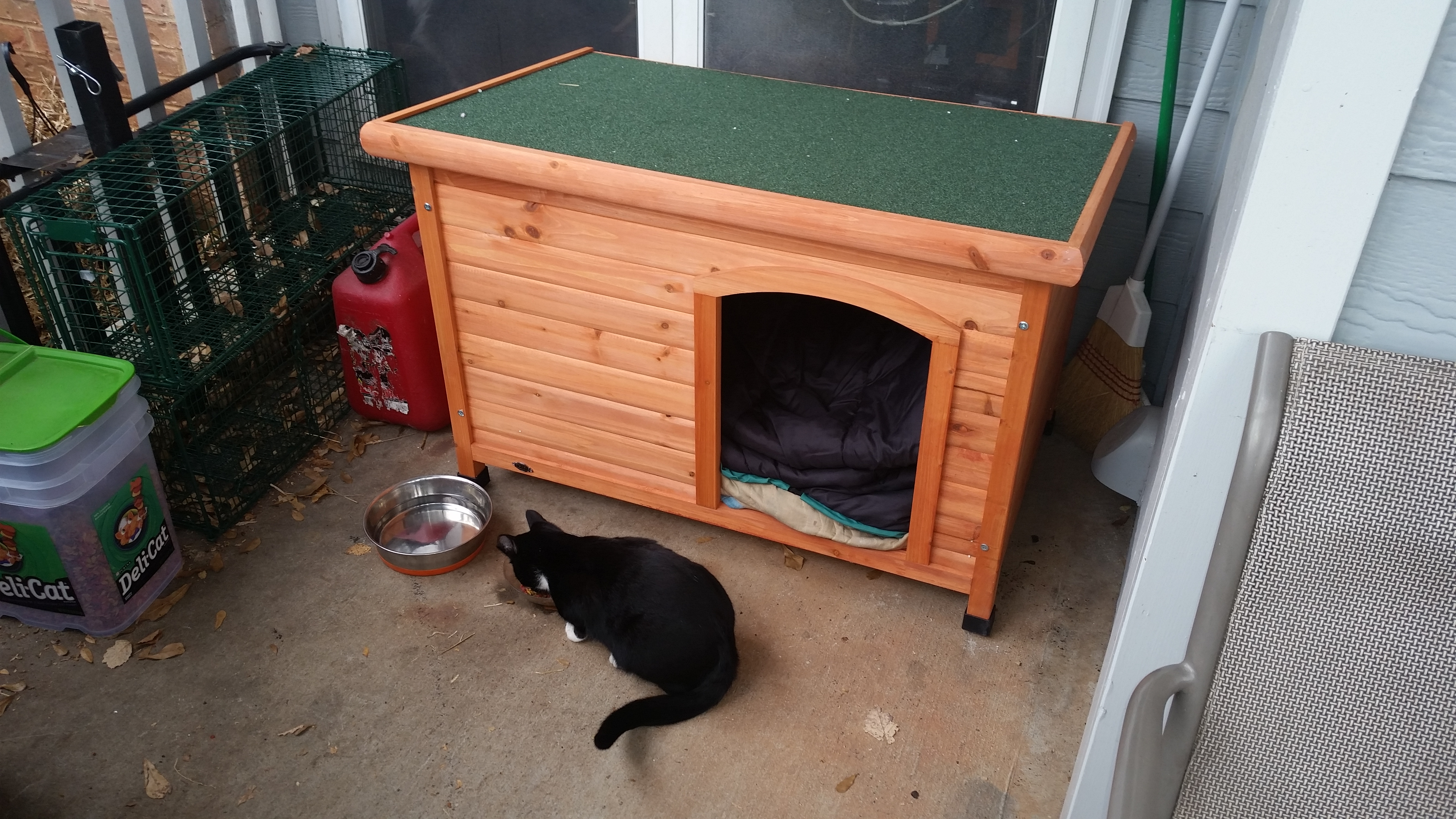 Tennessee inspects his new cathouse