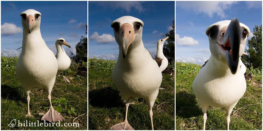 curious-birds2