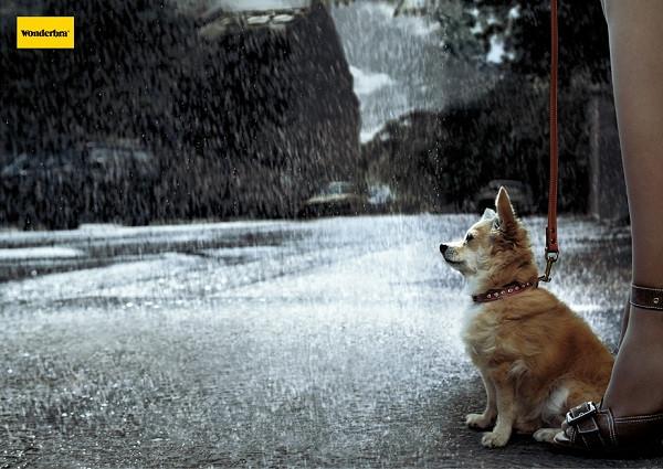 wonderbra-dog