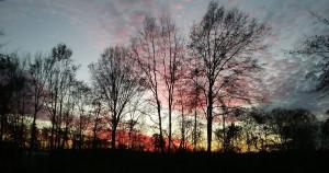 sunset 12-8.jpg