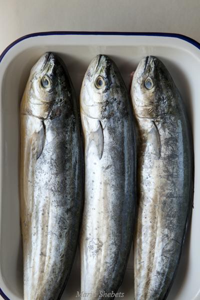 лампуки рыба