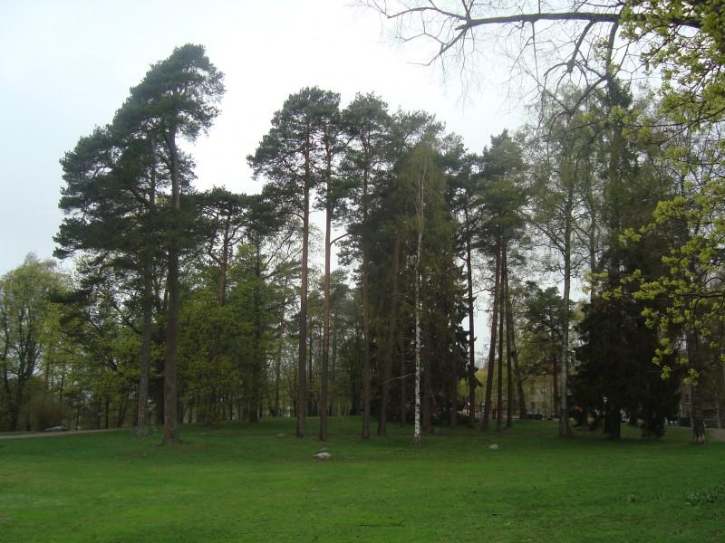 Хельсинки. Парк Сибелиуса (2)