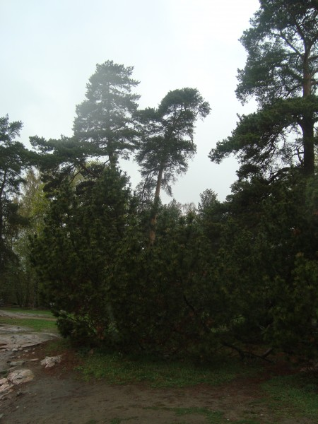 Хельсинки. Парк Сибелиуса (5)