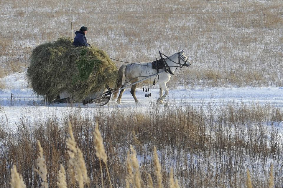 лошадка зима снег_n