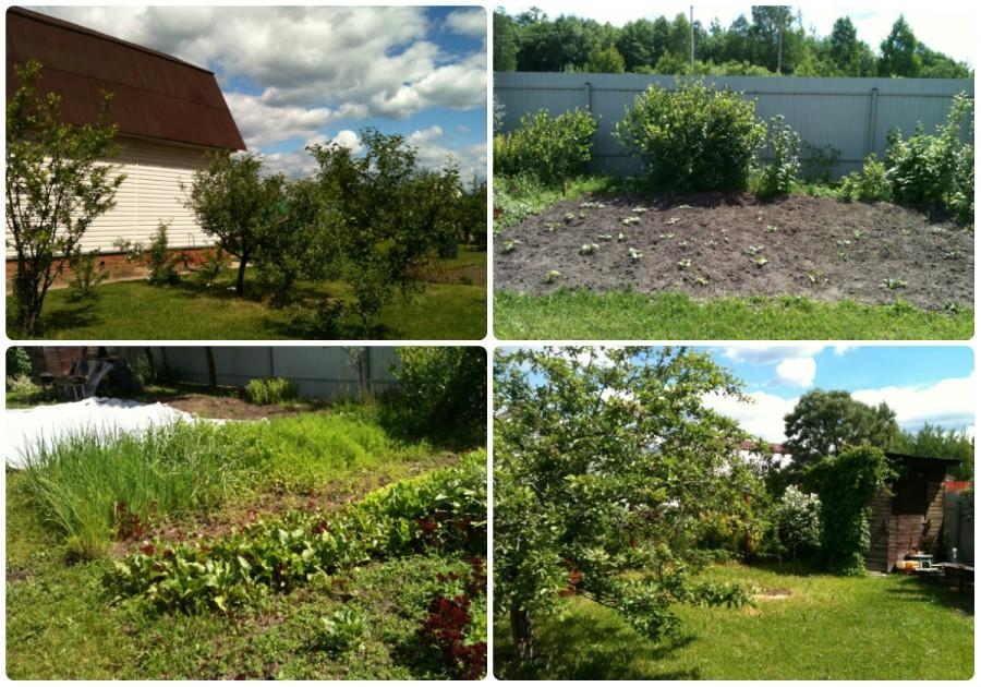 сад  и огород - 2015