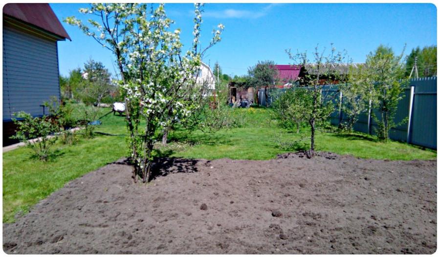14.05.2016 - новый газон